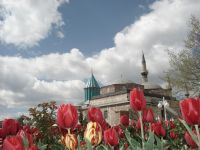 Konya Mevlana &lale