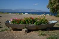Çiçekler Ve Deniz