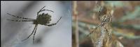Örümcek Altı Ve Üstü