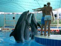 Yunusların Dansı