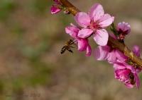 Arı'nın Baharı...