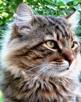Bahçemdeki En Güzel Kedi...