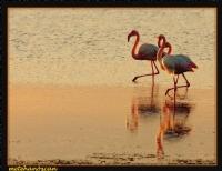 Flamingolar Marş Marş
