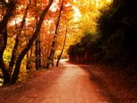 Ücra Ormanlarda Bir Haz Vardır