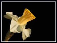 Ece Aktansel Çiçekleri-2