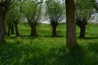 Piknik Alanı Önceden Dağlardı Şimdi Oldu Parklar..