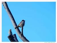 Kuş Bakışı -2