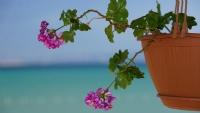 Çiçek Ve Deniz...