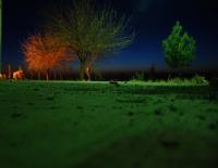Gecenin Renkleri