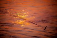 Geride Tüm Deniz Gönülleri Saracak İz Bırakıp Uç G