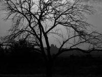 Kuru Bir Ağaç Ve Uçhisar Kalesi