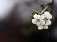 Baharın Müjdecisi
