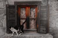 Pencere Önündeki  Kedi