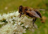 Bir Çiçek Bir Böcek
