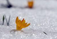 Kar Çiçekleri