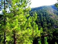 Karagöl Ormanları Denizli