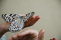 Kelebek Ve İnsan Sevgisi
