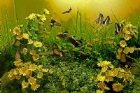 Kelebek Çiftliği