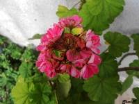 Kurumaya Çalışan Çiçek :)