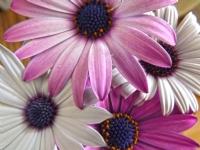 Vazodaki Çiçekler