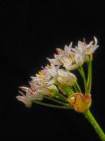 Ece Aktansel Çiçekleri-3