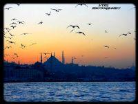 Martılar İstanbul U Terk Ediyor