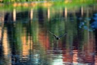 Güvercin Uçuverdi :)