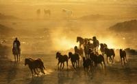 gün batımı - Fotoğraf: Muhammed Nuri Sert