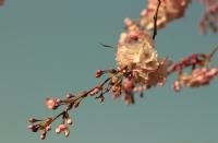Kıştan Sonra Bahar