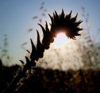Güneşe Sarılmak