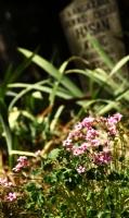 Mezarlık Çiçekleri1