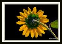 Sonbaharın Sarısı