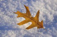 Kış Ve Sonbahar