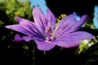 Yabani Çiçek