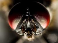 Sinek küçüktür baktıkça bakasın gelir - Fotoğraf: D.  Erhan Ersoy