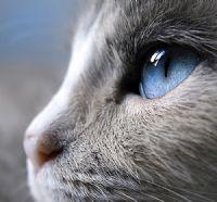 Gözümün İçinde Aşk