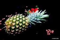 "Miniciks Hayatlar "" Ananas """