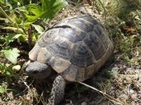 Kaplumbağam