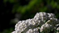 İlkbaharın İlk Çiçeklerinden...