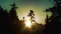 Ağaçlar Ve Günbatımı