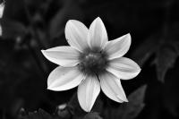 İçimizdeki Çiçek.