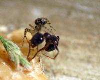 Karınca-2