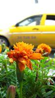 Kasımpatı Taksi