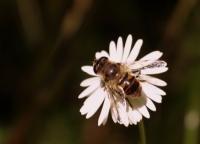 Bahar Böcekleri