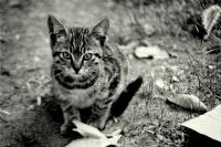 Gülhanede Bir Kedi Yavrusu...