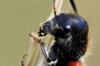 Böcek Portresi