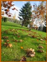 Zaman Şimdi Sonbahar...