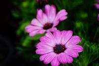 Çiçeklerin Dili Olsa