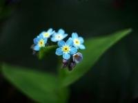 Yeşili, Mavisi - Fotoğraf: Hakan Kadıoğlu