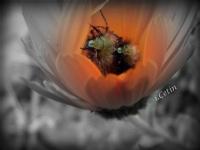 Bitki Ve Böcek